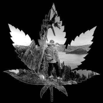 Washington_leaf
